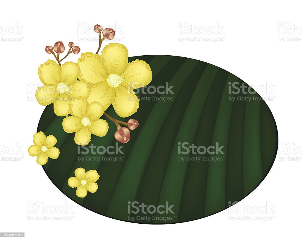 Beautiful Yellow Simpor Flowers on Banana Leaf vector art illustration