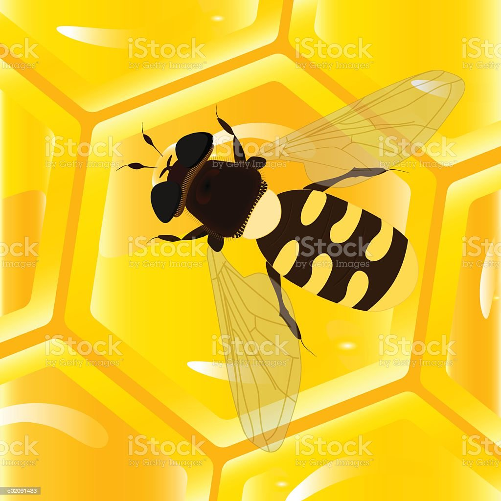 bee and honeycomb vector art illustration