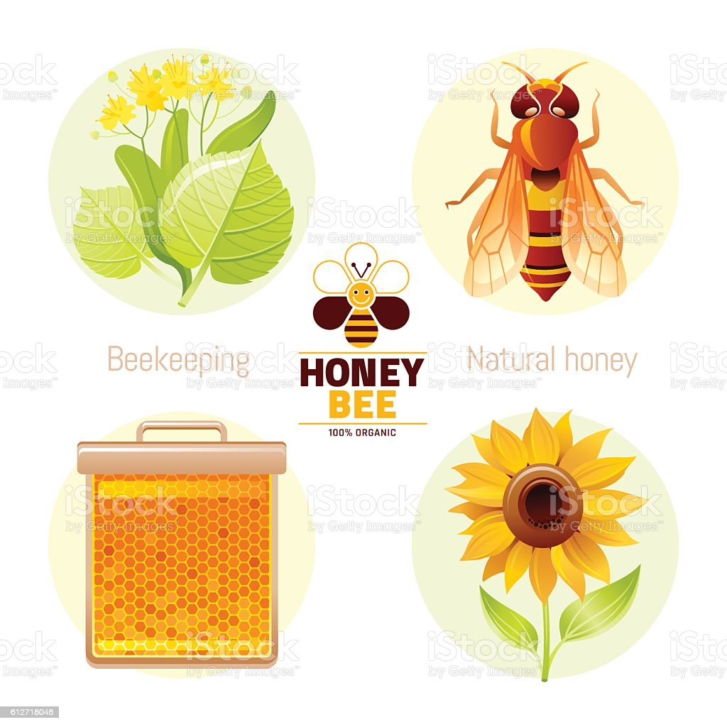 Bee honey icons  - honeybee, linden, honeycomb, sunflower. Vector illustration vector art illustration