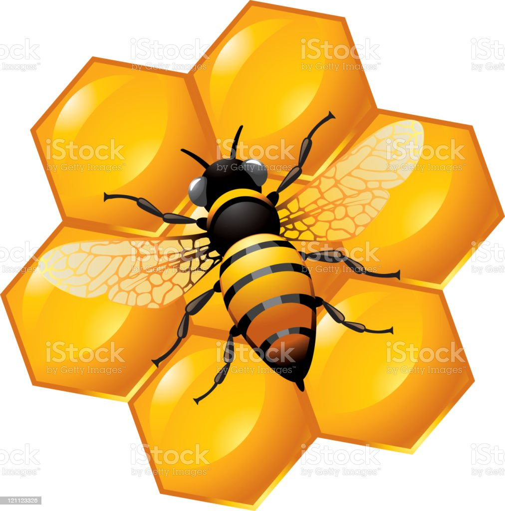 Bee on a part of honeycomb royalty-free stock vector art