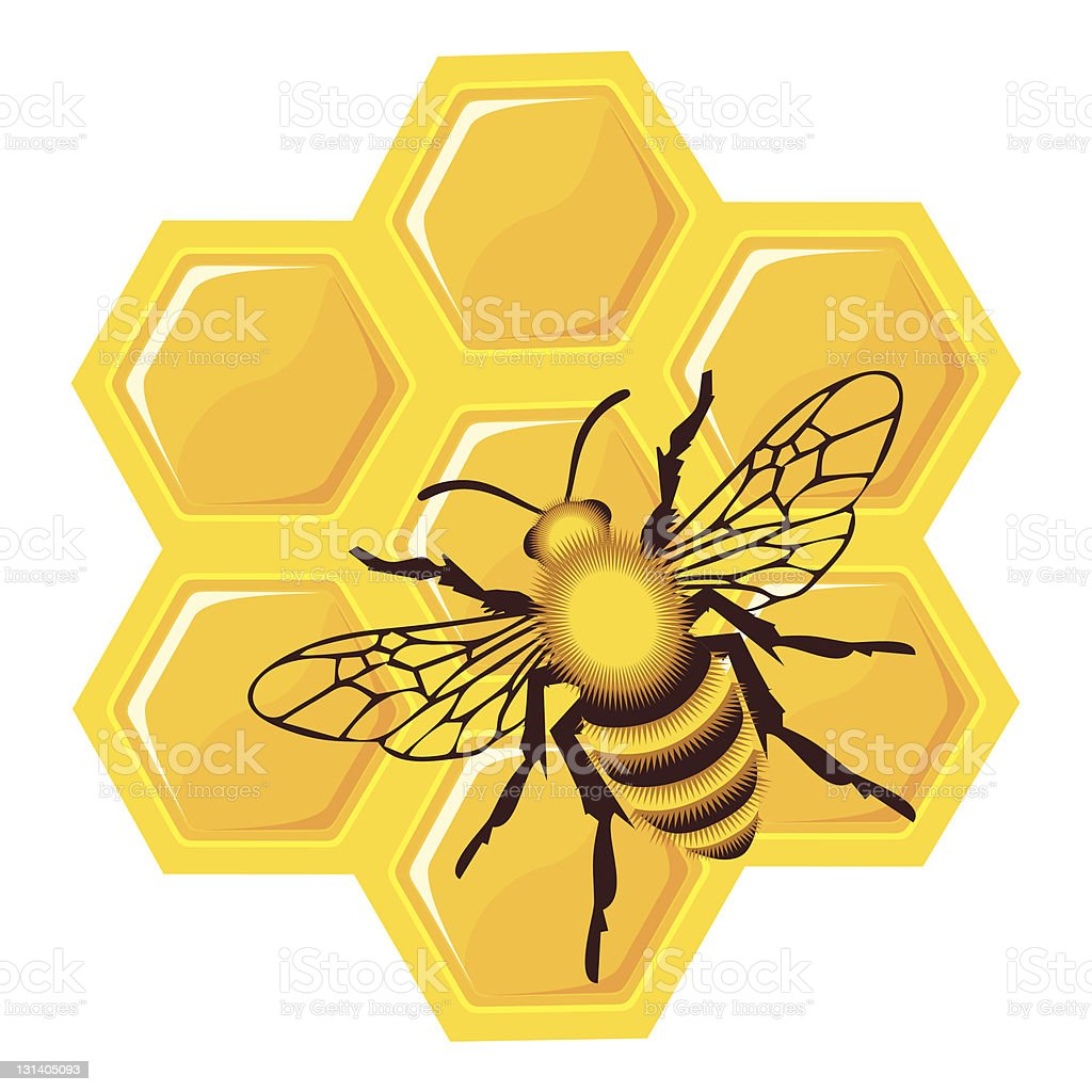 bee on honey cells vector art illustration