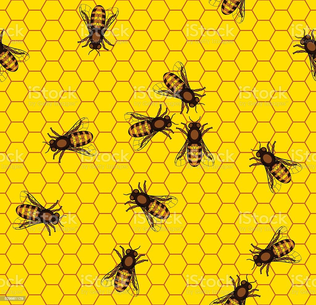 Bee on honeycomb pattern vector art illustration