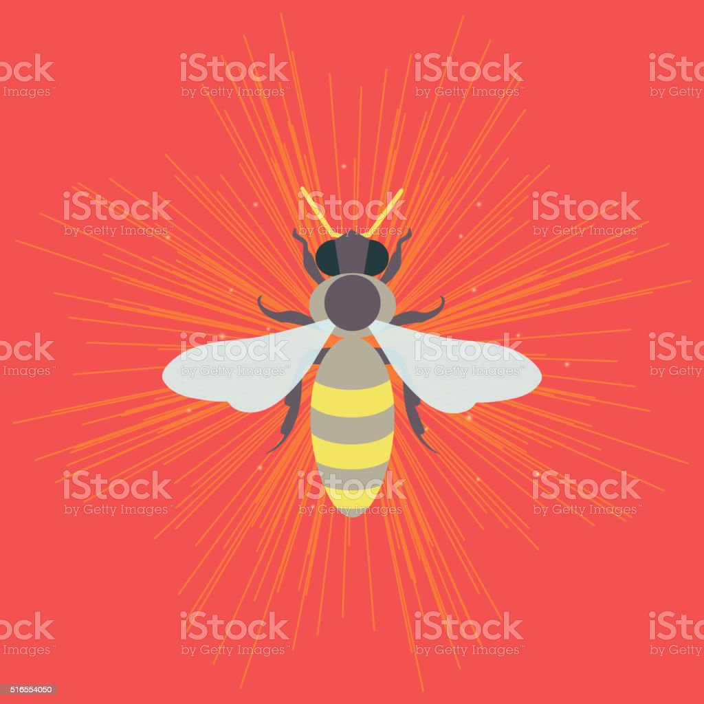 Bee on pink background vector art illustration