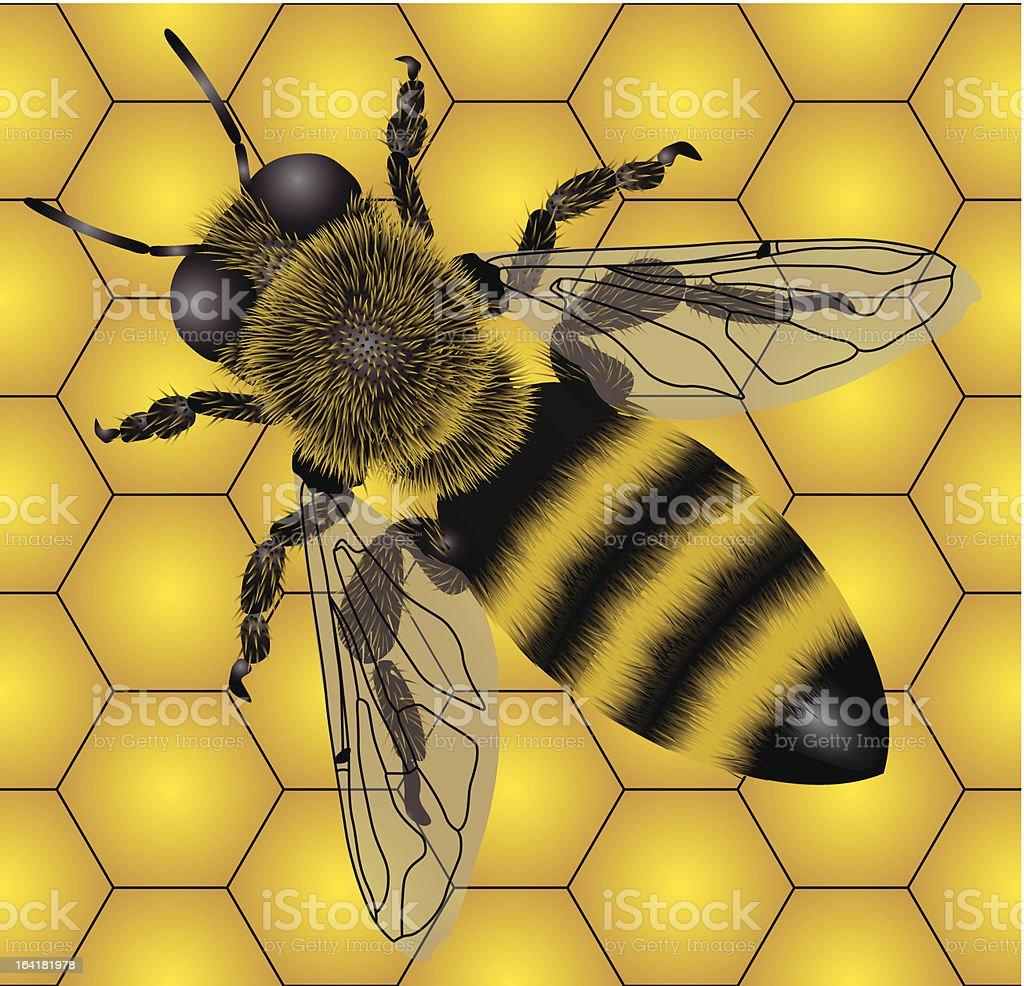 Bee royalty-free stock vector art