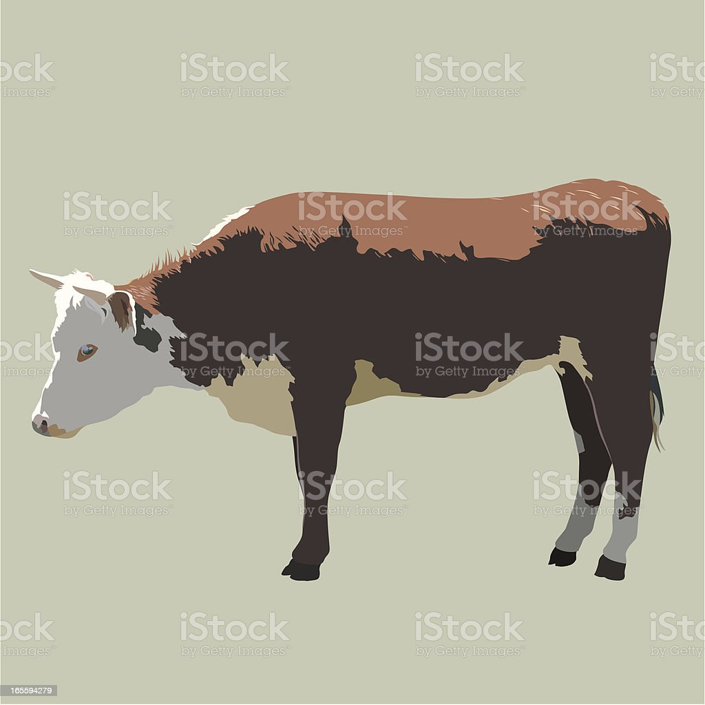 Beef Cattle royalty-free stock vector art