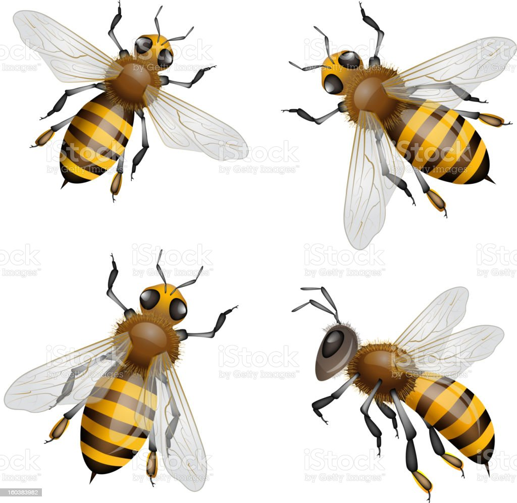 Bees flying vector art illustration