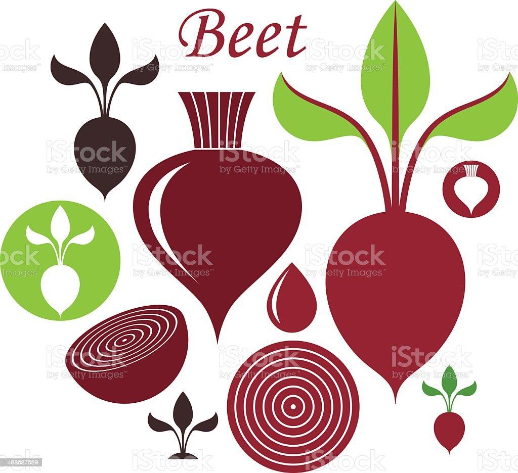 Beet vector art illustration