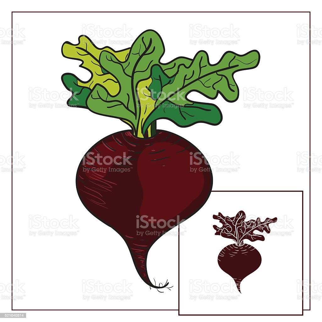 Beet. Vector illustration vector art illustration