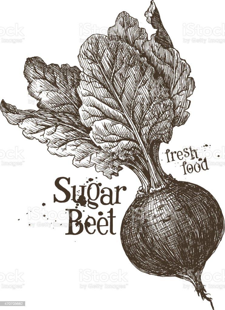 beet vector logo design template. fresh vegetables, food or harvest vector art illustration