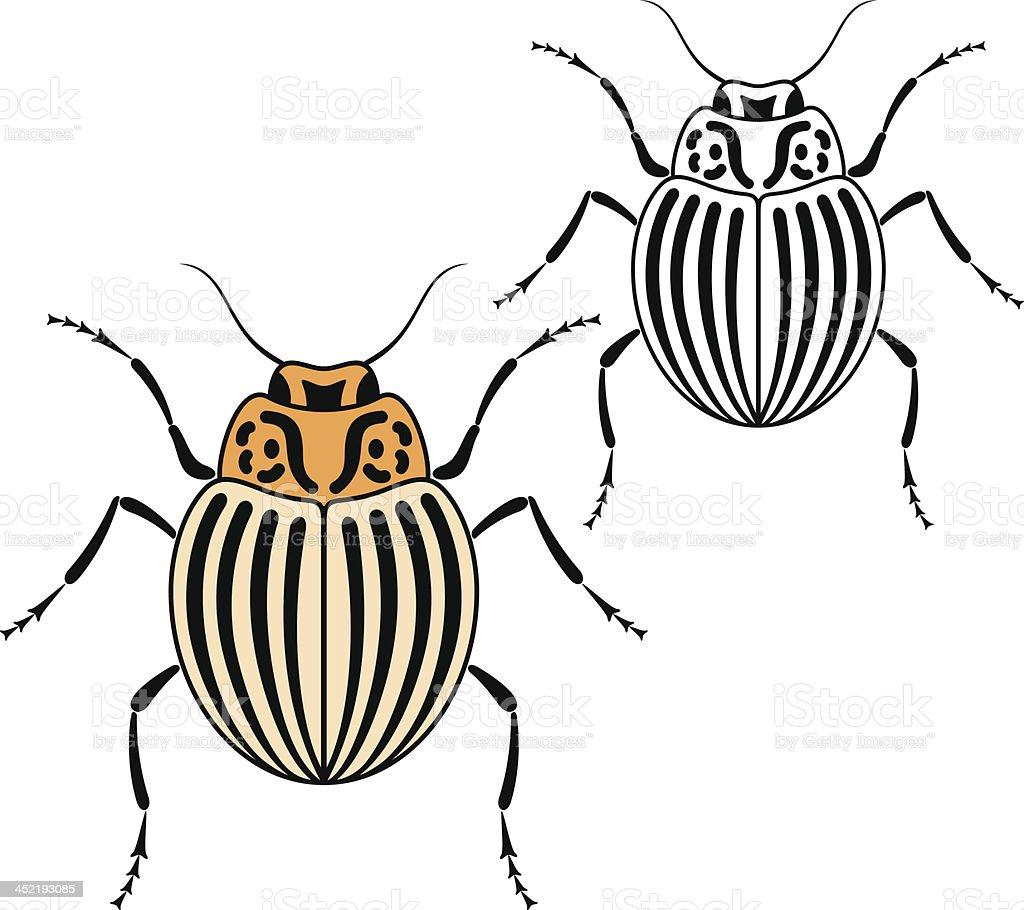 Beetle. Colorado vector art illustration
