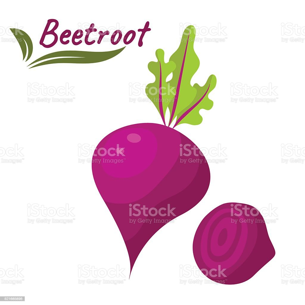Beetroot vegetable vector illustration. Beet root with leaves and slice vector art illustration