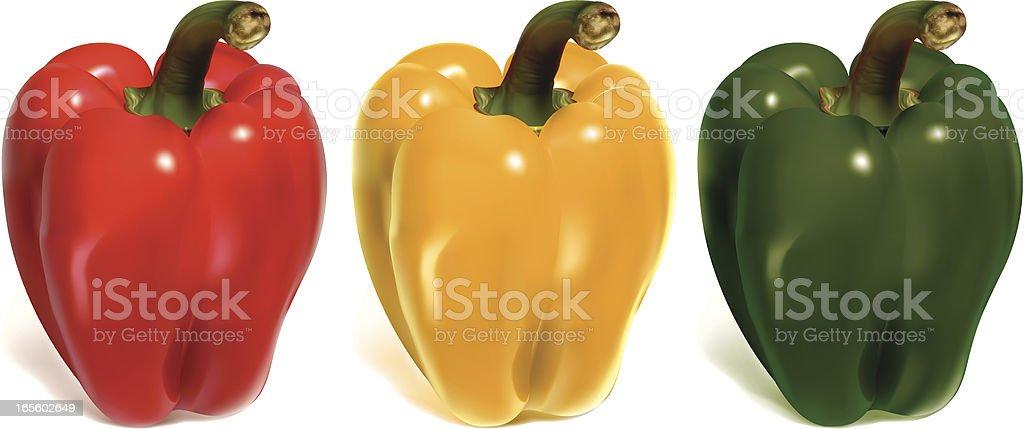 bell peppers vector art illustration