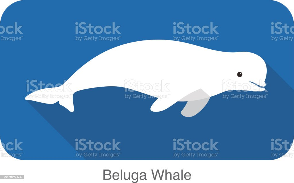 Beluga whale swimming in the water, vector illustration vector art illustration