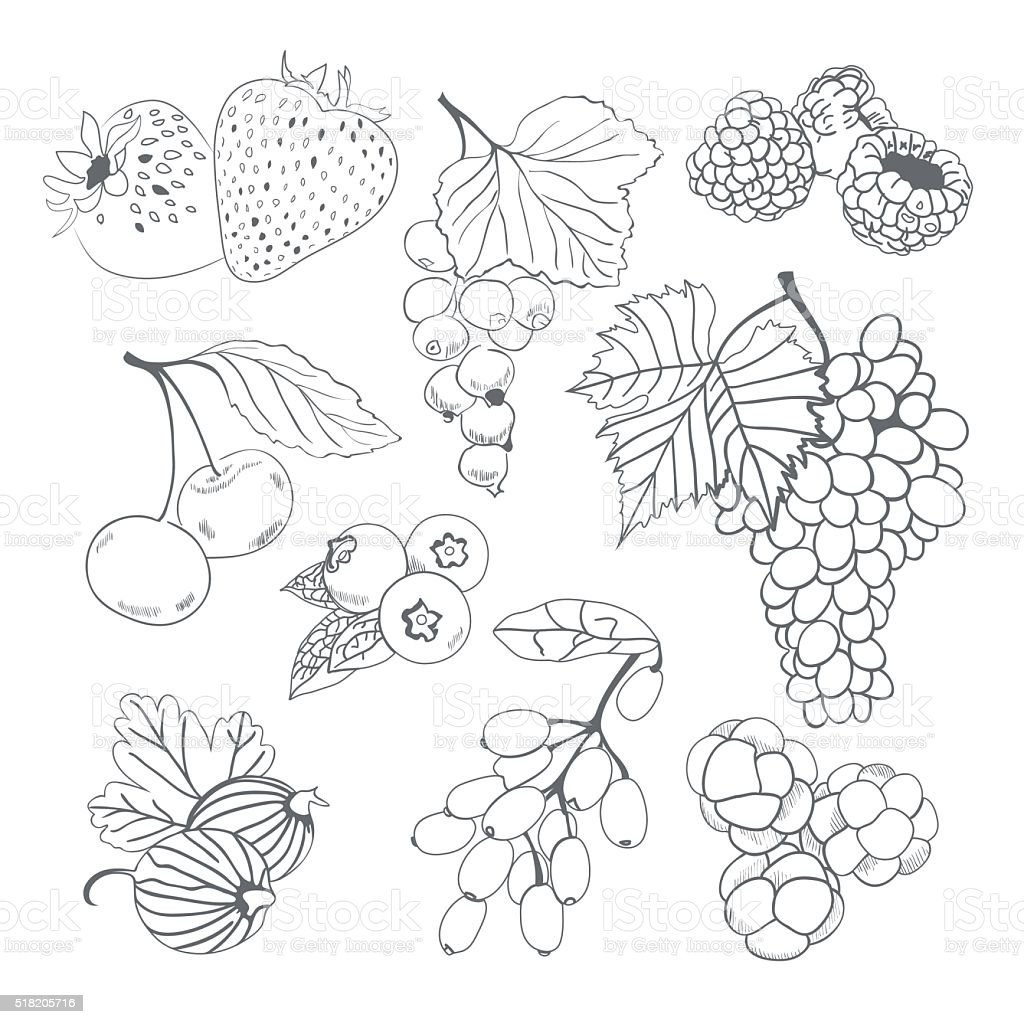 Berries collection for coloring book vector art illustration