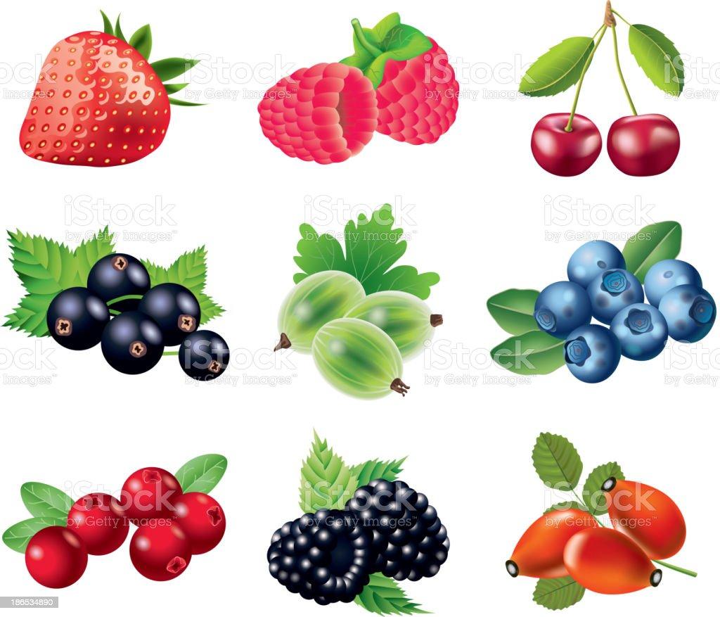 Berries photo-realistic set vector art illustration
