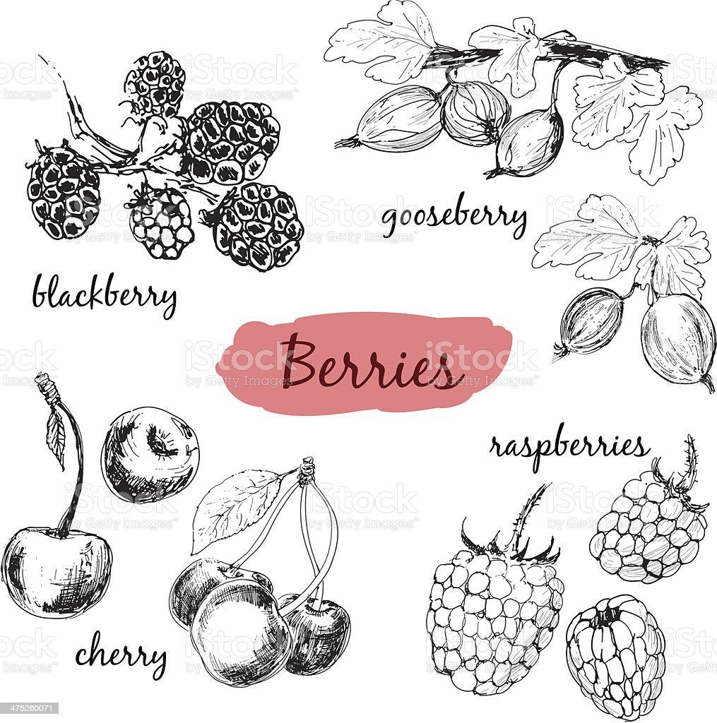 Berries. Set of illustrations vector art illustration