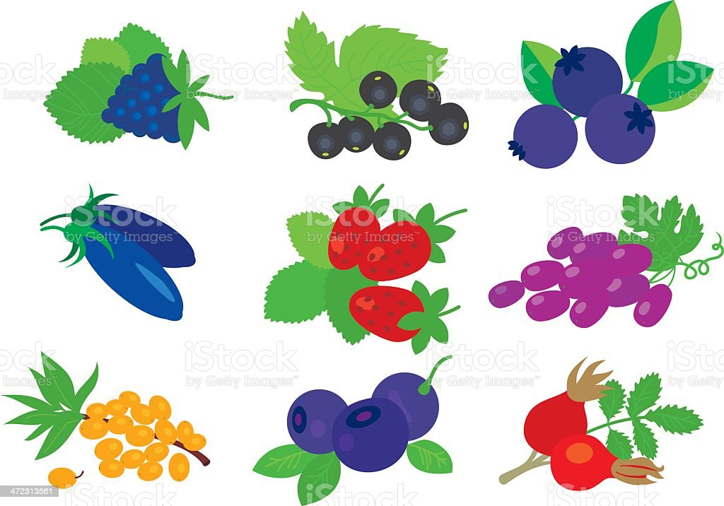 Berries set. vector art illustration