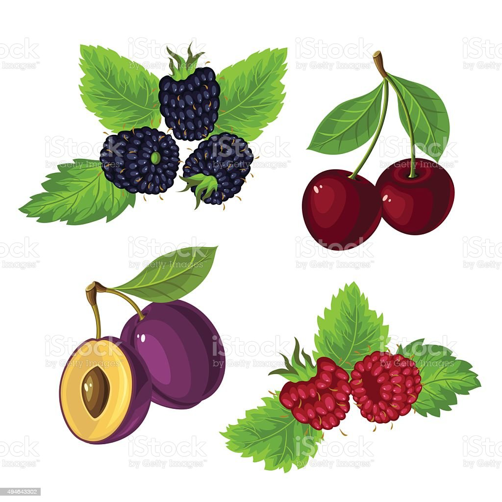 Berries with leaves vector art illustration