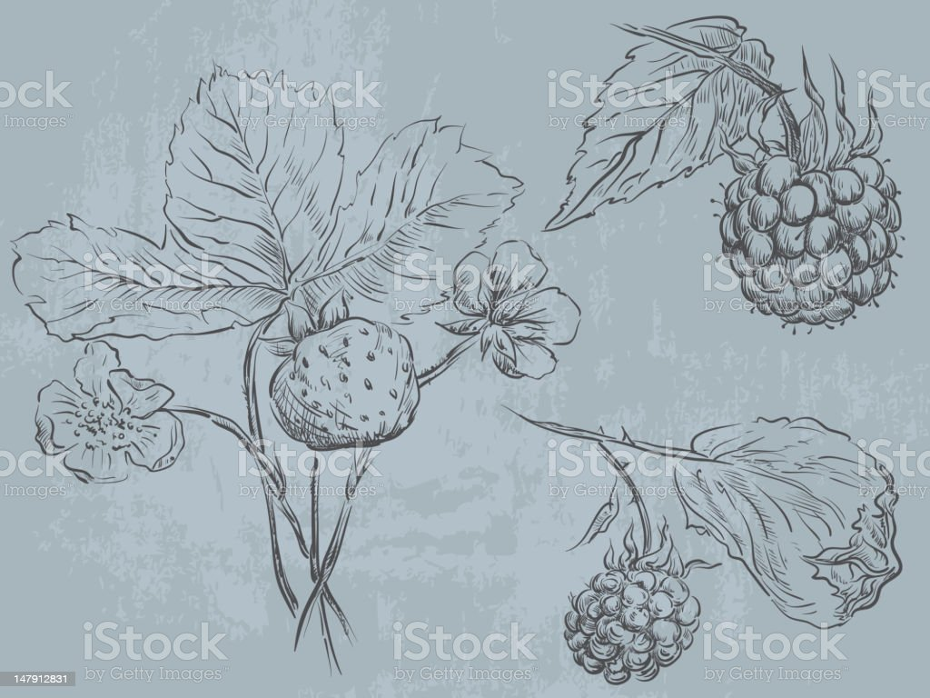 Berry fruit royalty-free stock vector art
