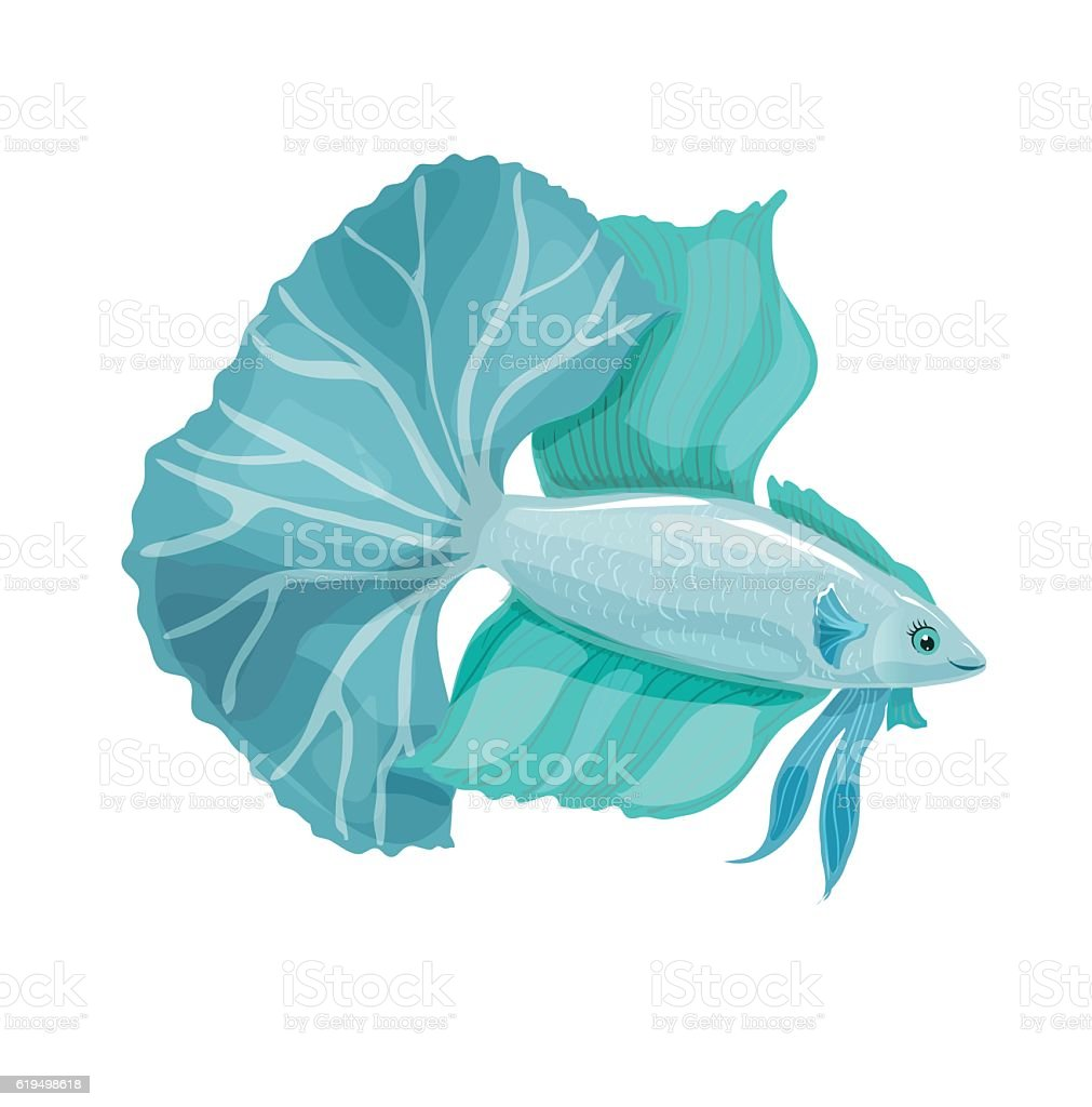 Betta bellica. Aquarium vector fish with a big tail. vector art illustration