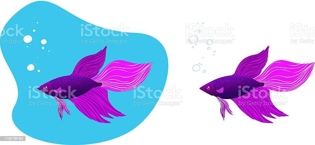 Betta Fighting Fish royalty-free stock vector art
