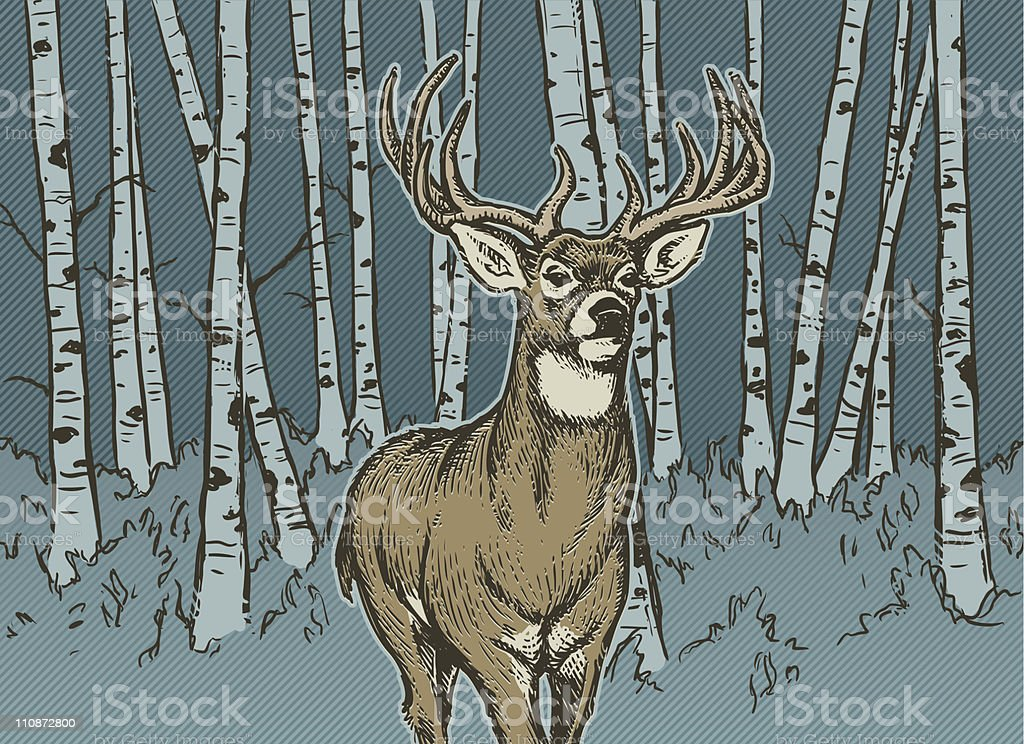 Big Buck vector art illustration