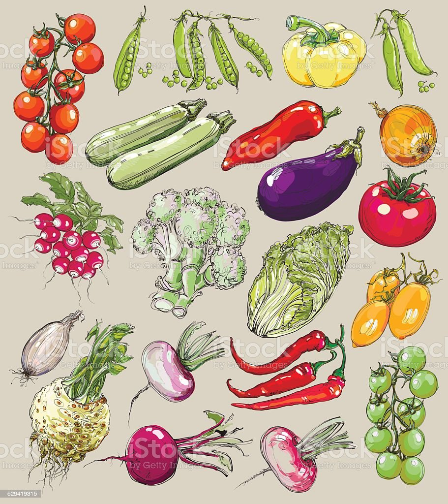 Big collection of hand-drawn vegetables, vector illustration in vintage style. vector art illustration