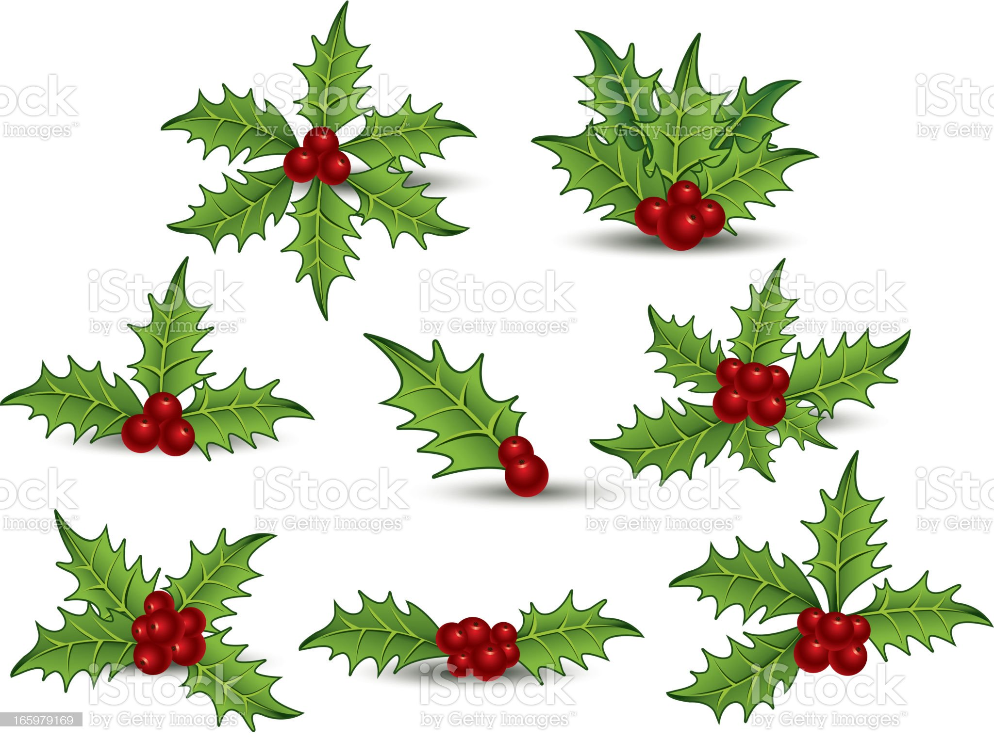 Big holly collection royalty-free stock vector art
