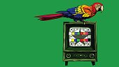 Big macaw sitting on a color TV in retro style