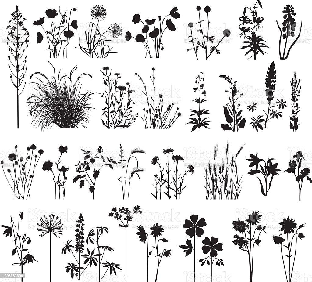 Big plant's collection vector art illustration