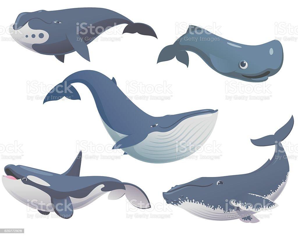 Big set cartoon whales vector art illustration