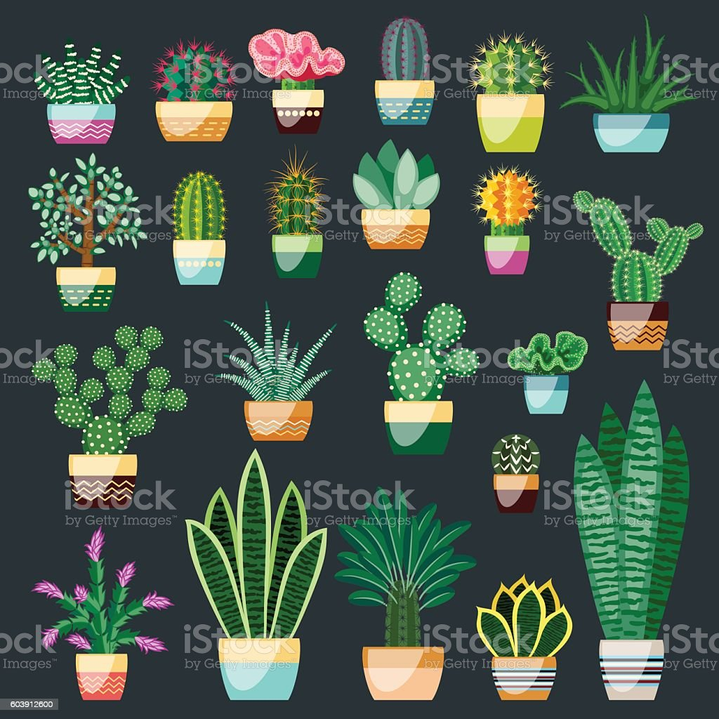 Big set of cactuses and succulents in pots. vector art illustration