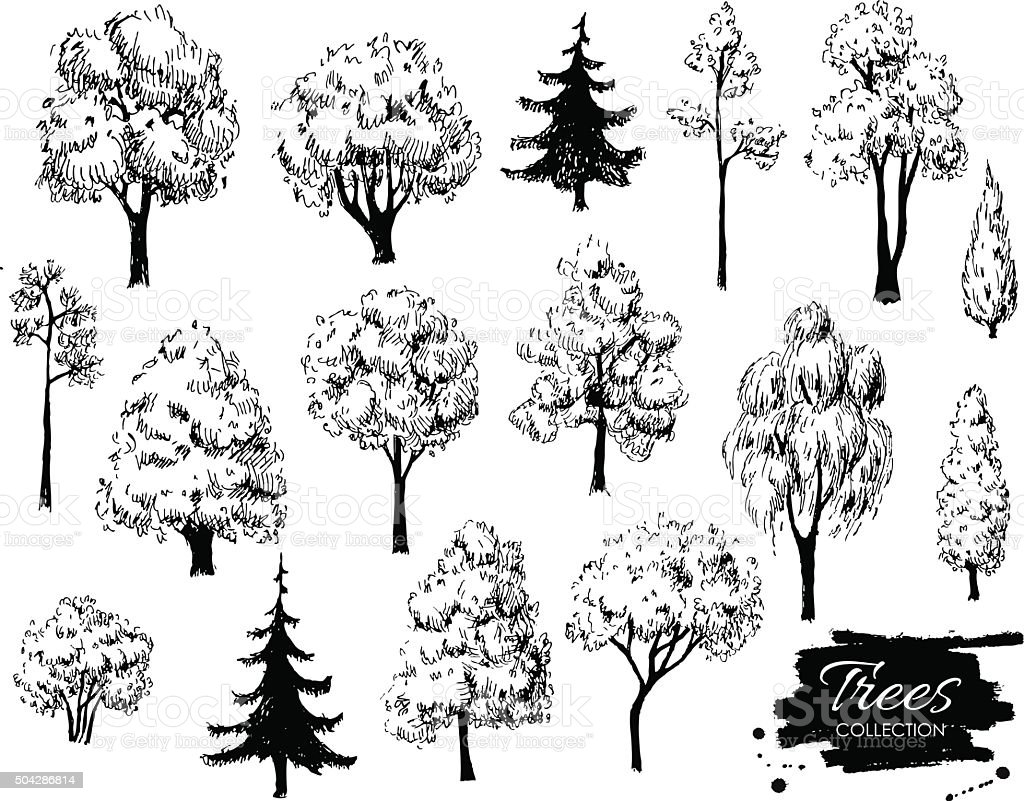 Big set of hand drawn tree sketches. vector art illustration