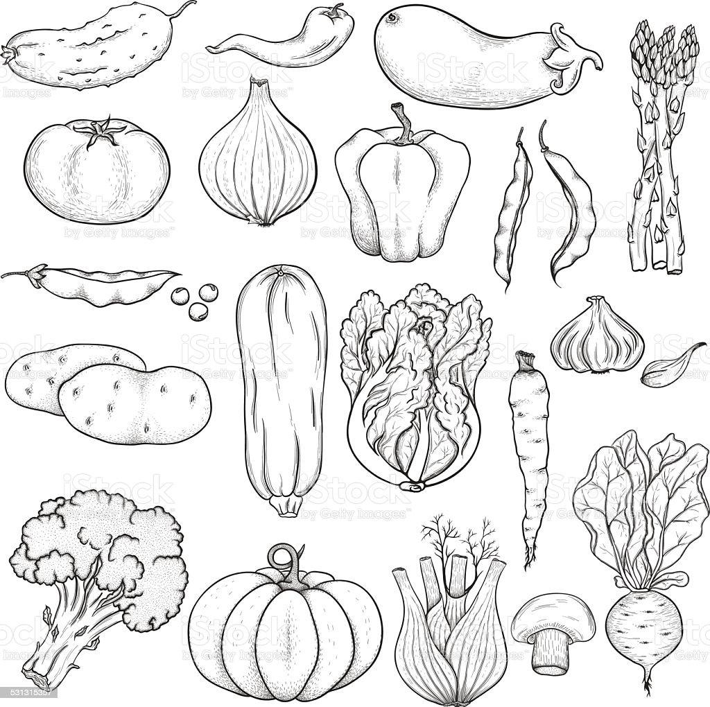 Big set of vegetables vector art illustration
