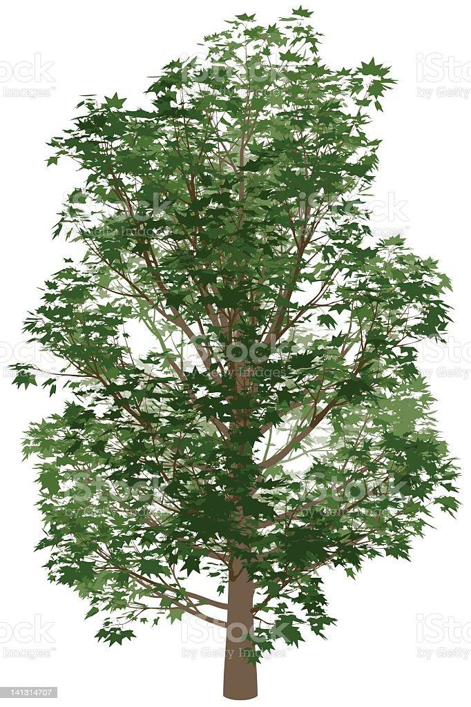 big tree royalty-free stock vector art