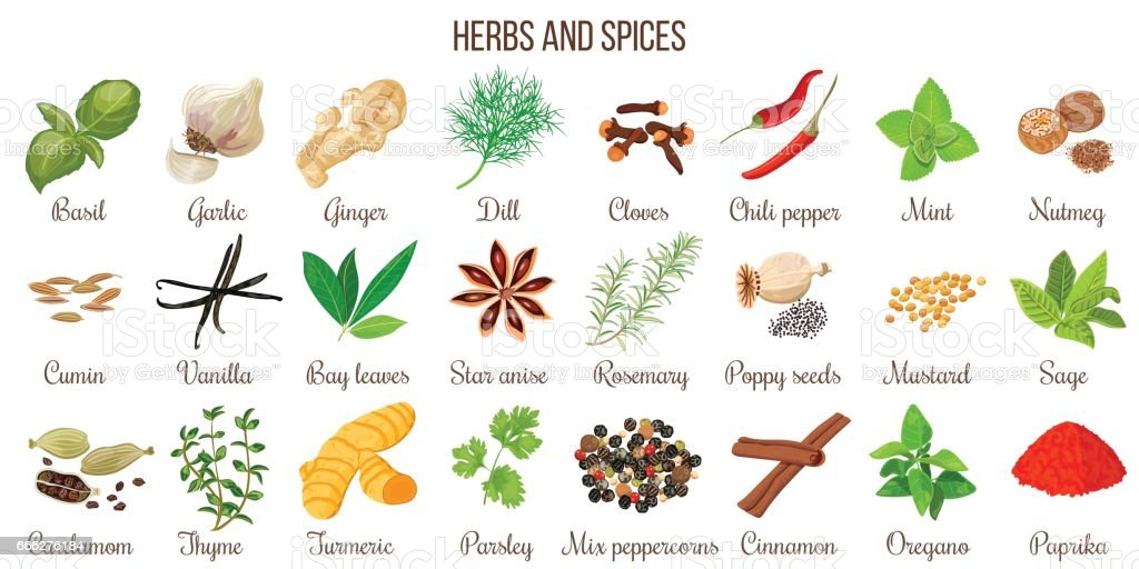 Big vector set of popular culinary herbs and spices vector art illustration