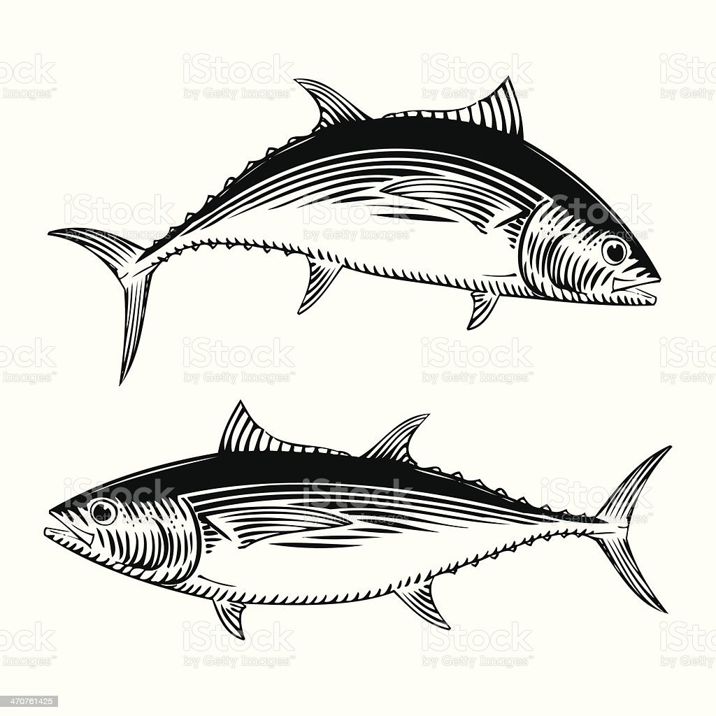 BigEye Tuna vector art illustration