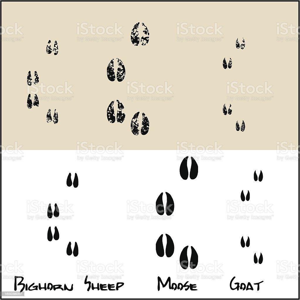 Bighorn Sheep - Moose - Goat vector art illustration