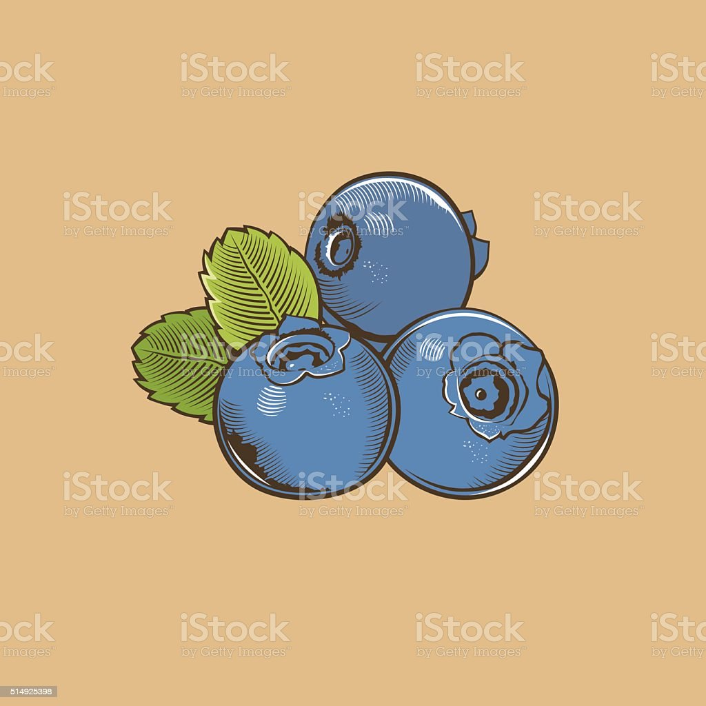 Bilberry in vintage style. Colored vector illustration vector art illustration