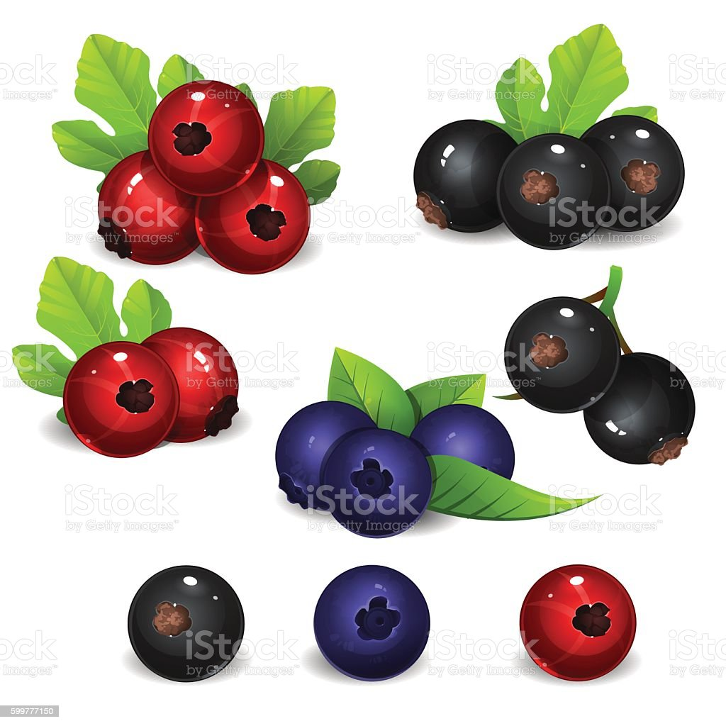 Bilberry with black and red currant 2 vector art illustration