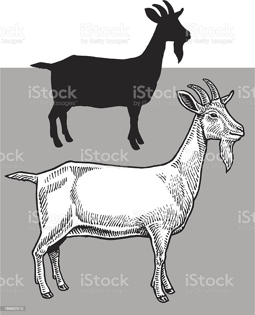 Billy Goat - Farm Animals vector art illustration
