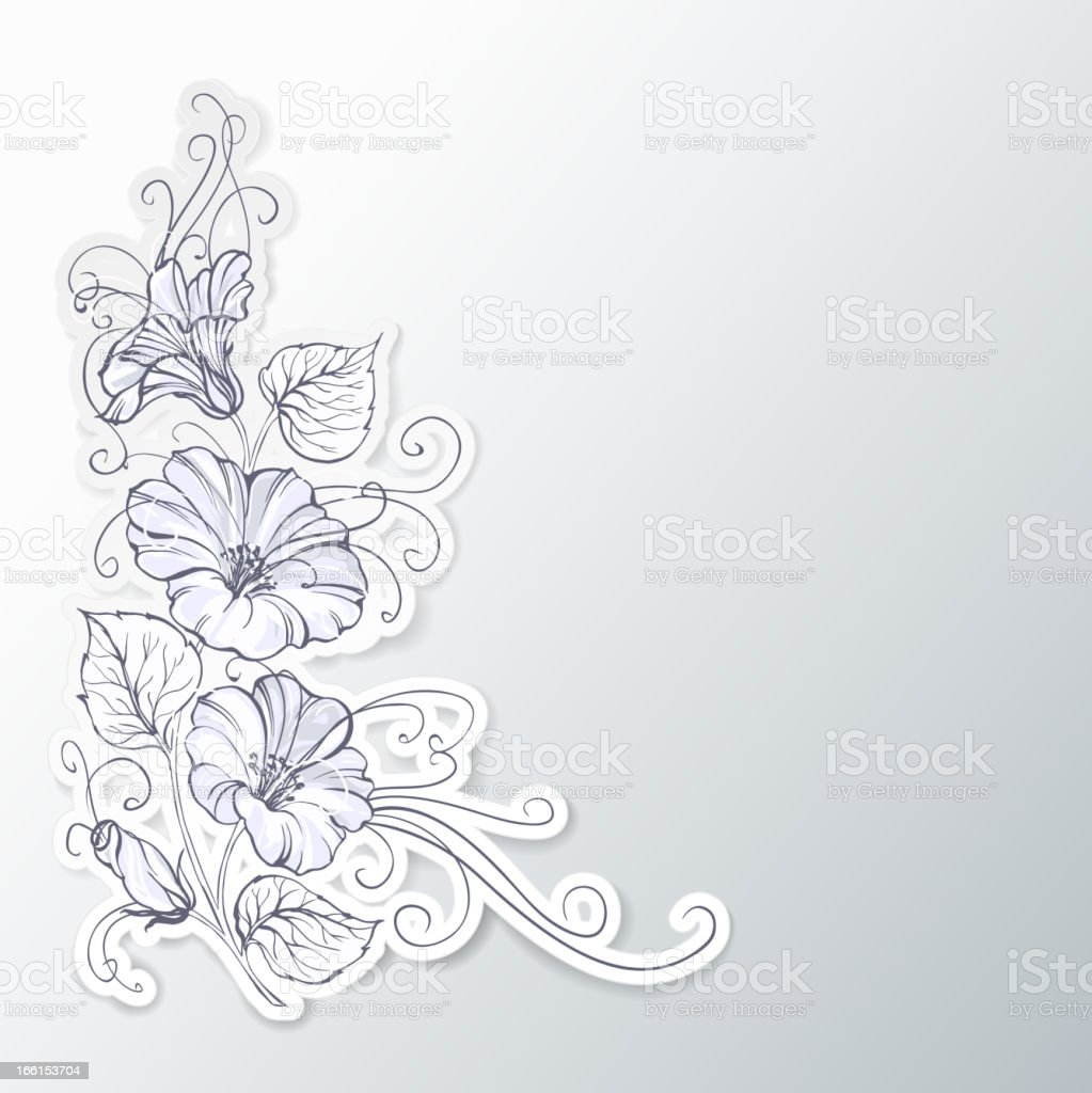 Bindweed on a gray backgroun? royalty-free stock vector art