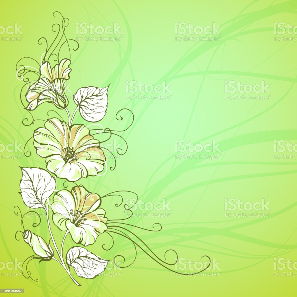 Bindweed on a green background royalty-free stock vector art