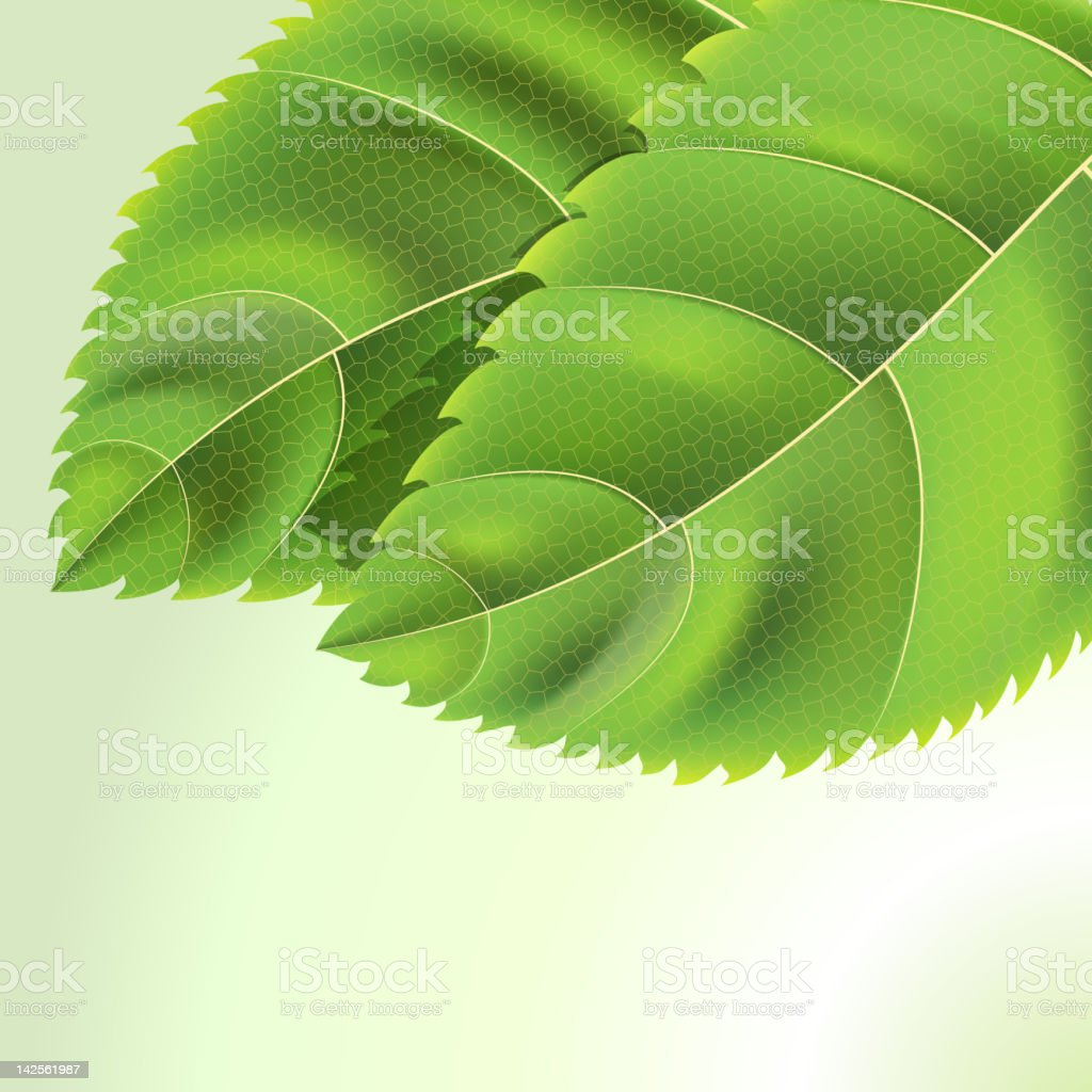 Bio Green leaves background with drops royalty-free stock photo