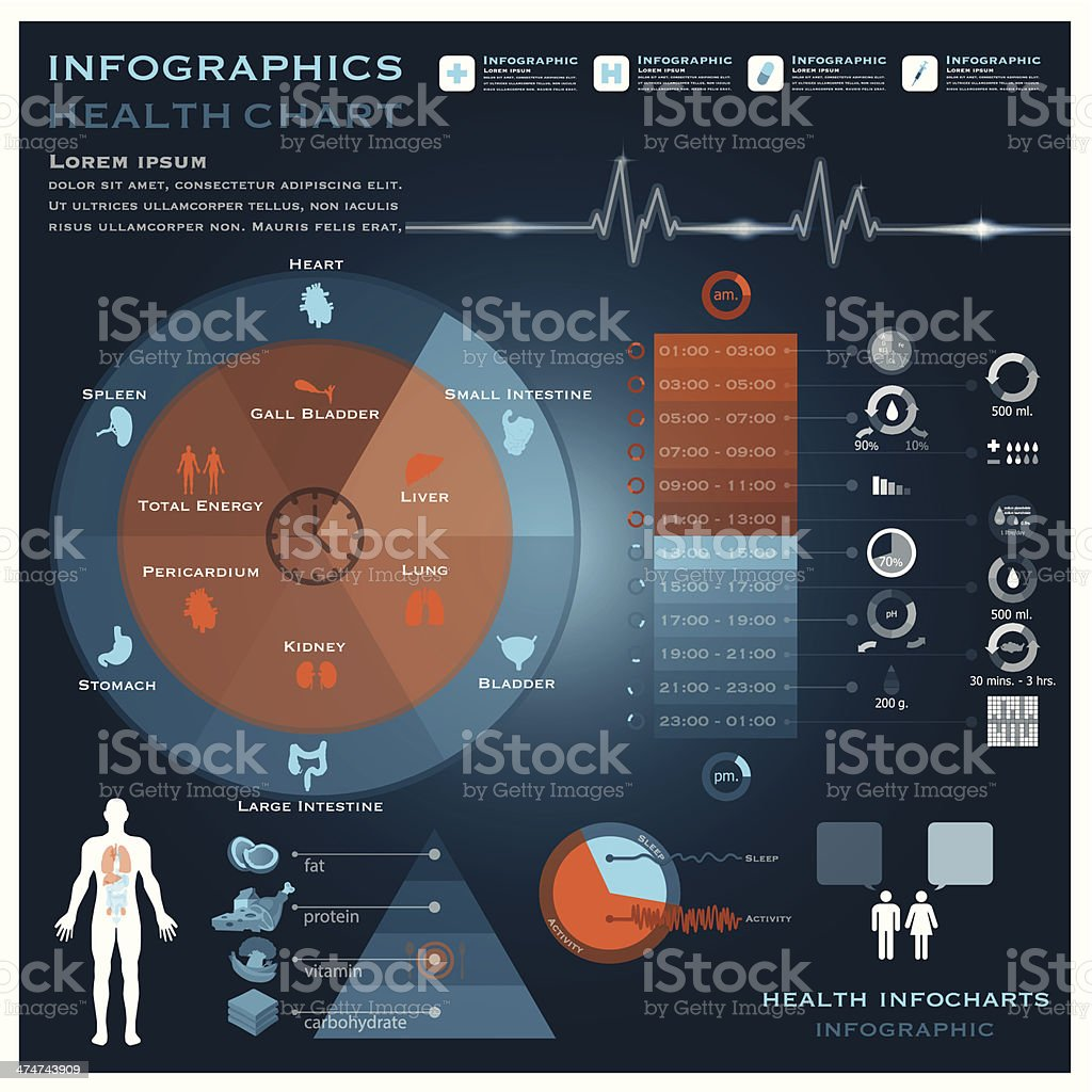 Biological Clock Health And Medical Infographic Infocharts royalty-free stock vector art