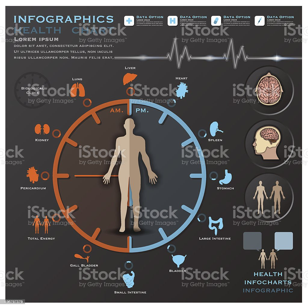 Biological Clock Health And Medical Infographic Infocharts vector art illustration