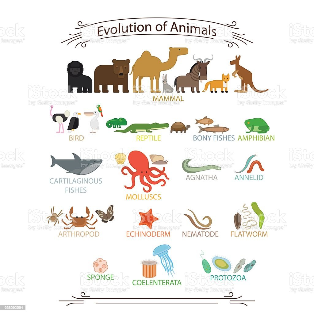 Biological evolution animals vector art illustration