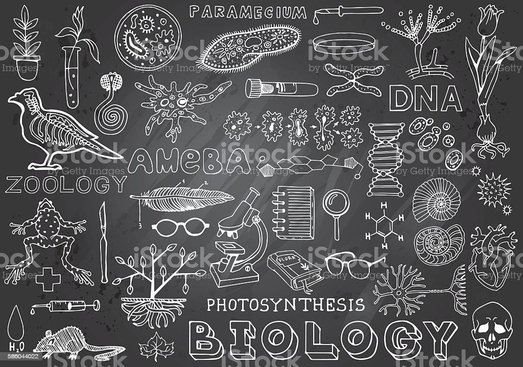 Biology Science Doodle Hand Drawing Elements. Science and Education theme. vector art illustration