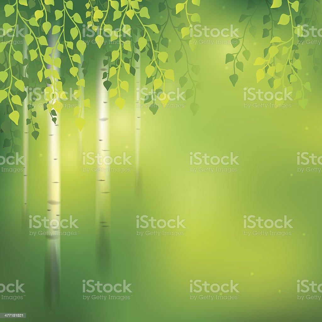 Birch background vector art illustration