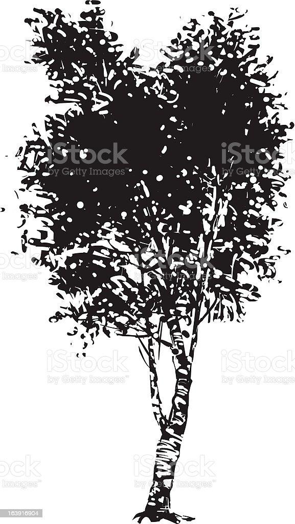 Birch tree silhouette vector art illustration